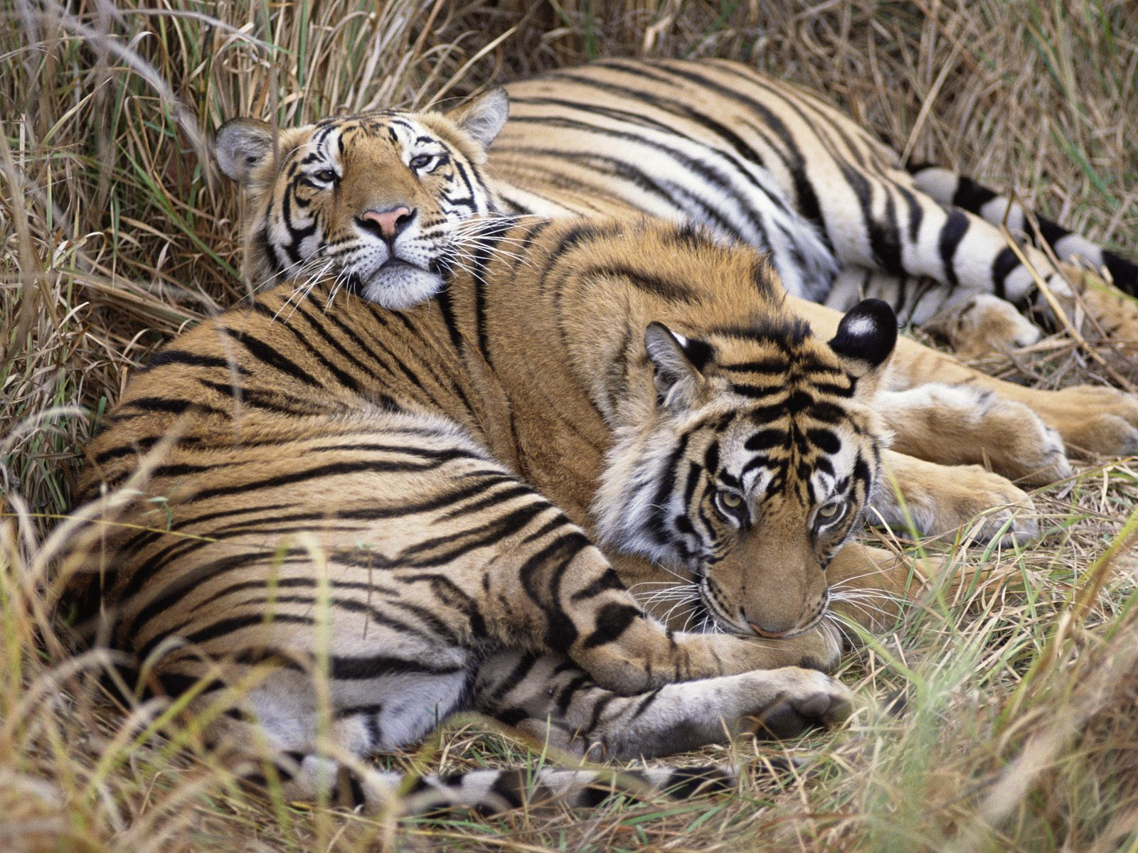Ranthambore Weekend Tour